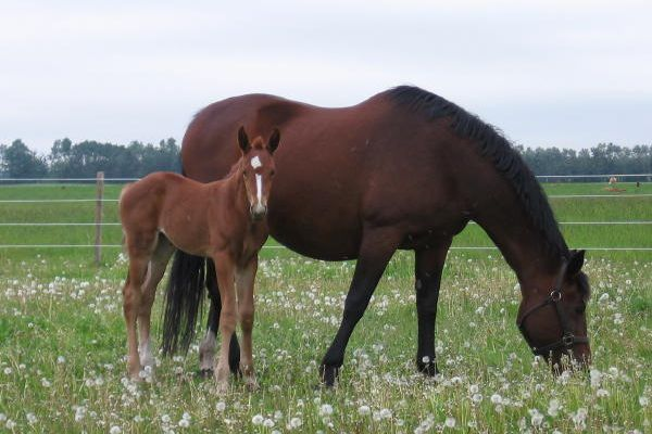 ww-tempranillo-foalF10A52EB-CBE6-0F00-E484-ED804DD15709.jpg