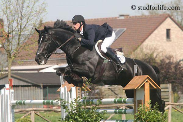 horse-vigaro-z-2big4FE5EA02-D13A-2420-E995-DA1D8FADC267.jpg