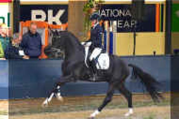 stallion-toto-jr-02-small4AC3D358-C92F-2AA6-5FFD-2A4875D2380C.jpg